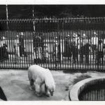 Zoo at Brookside Park